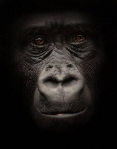 Noir et blanc : Des portraits d'animaux saisissants !                                                                                                                                                                                 Plus – pintabelle