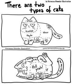 22 bandes dessinées hilarantes qui présentent ma vie avec deux chats coquins – clauzan
