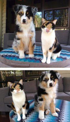 animaux : chien et chat tricolores – nounoursalain7